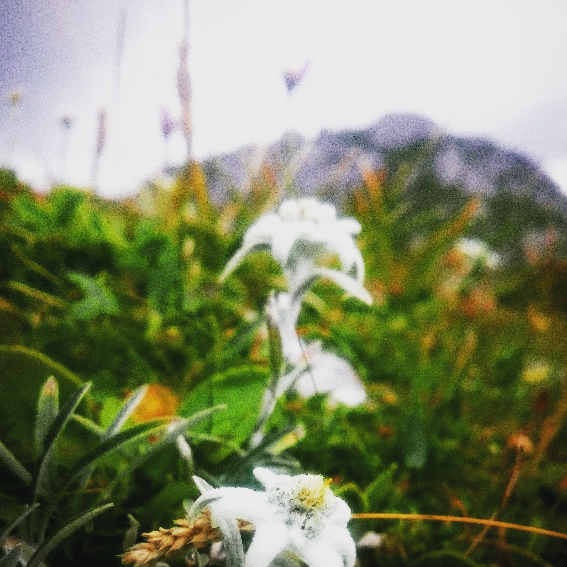Alpenüberquerung am wunderbaren Wanderweg E5, Anreisetag.